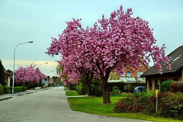 rua com arvore florida